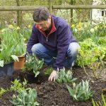 Wood Chips—The Secret to Effortless, Inexpensive Biodynamic Gardening