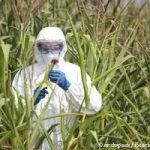 Experimental GMO Drug-Making Crops Grown with Little Oversight